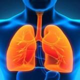 Πνεύμονες - Αναπνευστικό