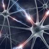 Νευροεκφυλιστικές Παθήσεις